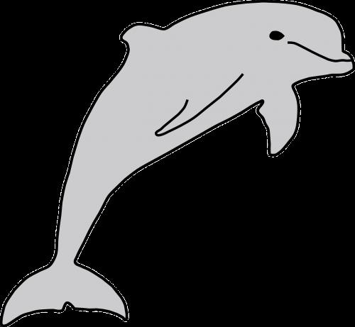 dolphin fish sea life