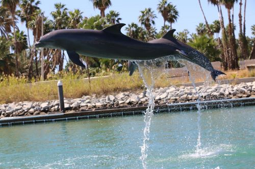 dolphin dolphins leap