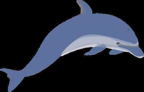 dolphin mammals swimming