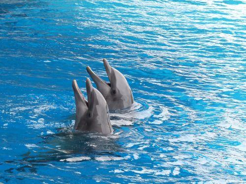 dolphin dolphins cetacean