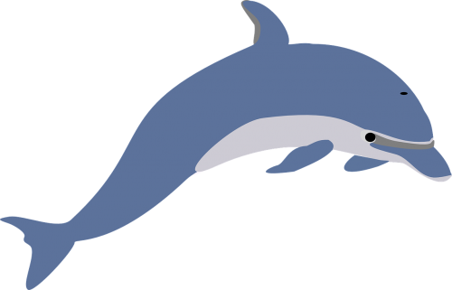 dolphin leaping fish