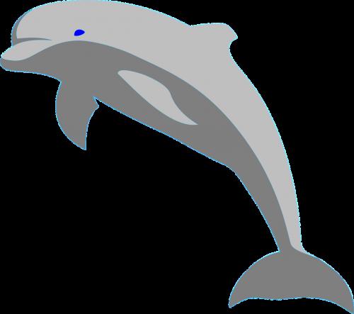 dolphin fish porpoise