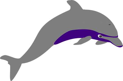dolphin leaping sea