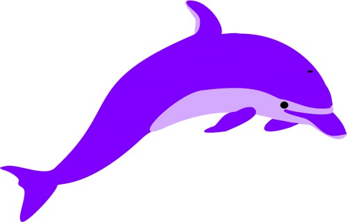dolphin porpoise mammal