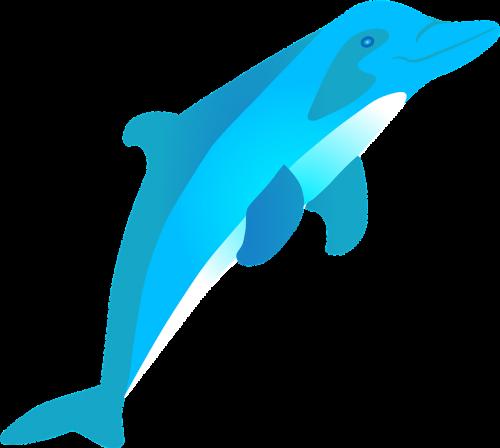 dolphin jumping mammal