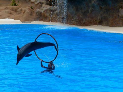 dolphin jump artistry