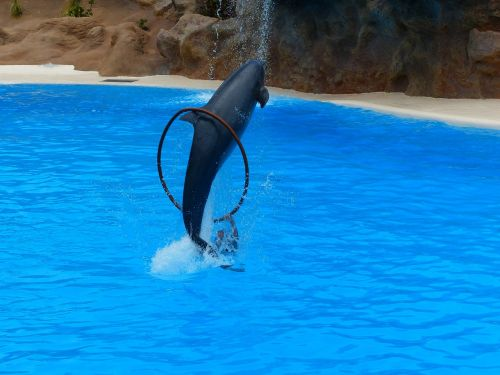 dolphin jump ring