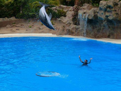 dolphin jump high