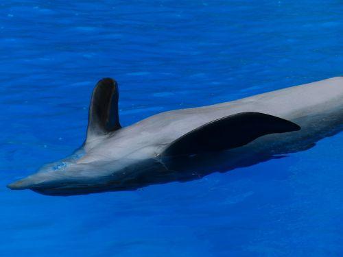 dolphin animal backstroke