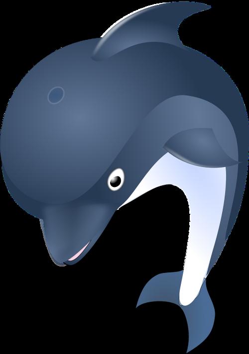 dolphin ocean animal