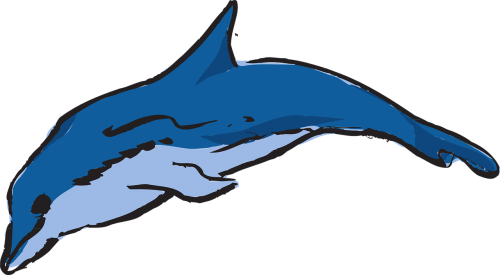 dolphin ocean leaping