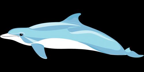 dolphin mammal fins