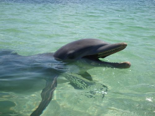dolphin water ocean
