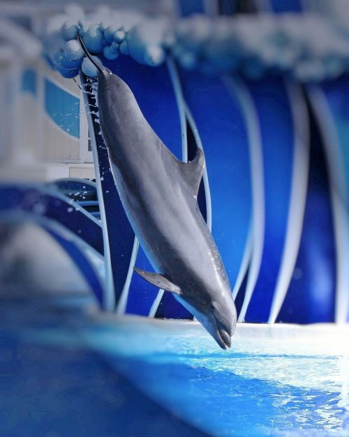 dolphin show perform