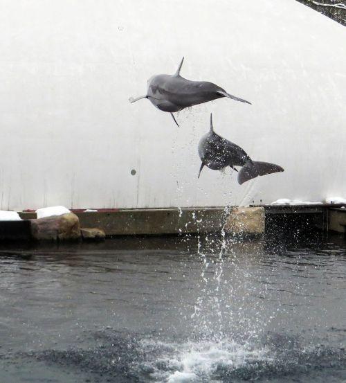 dolphin sea marine mammals