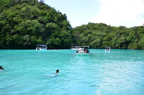 dolphin palau beach