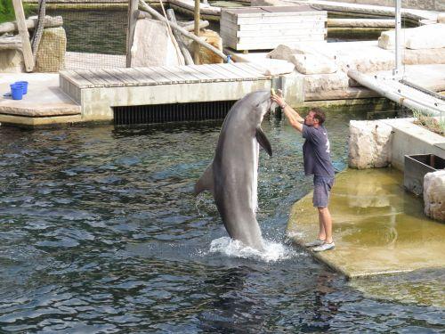 dolphin lagoon nuremberg