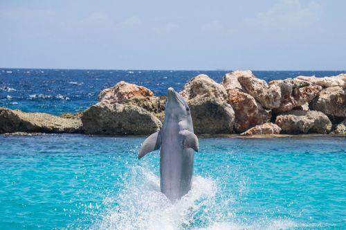 dolphin aquarium jumping