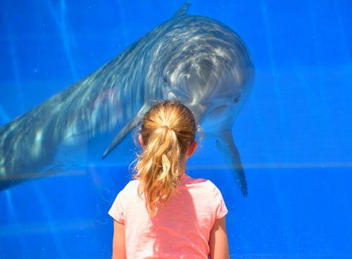 Dolphin At Aquarium