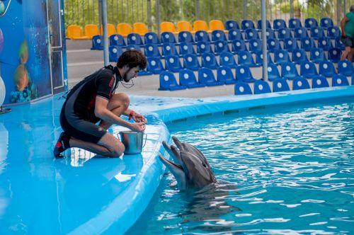 dolphins dolphinarium training