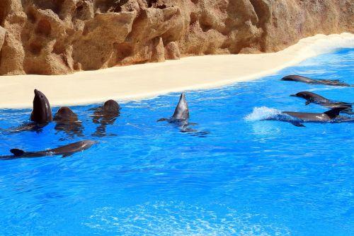 dolphins tenerife loro park