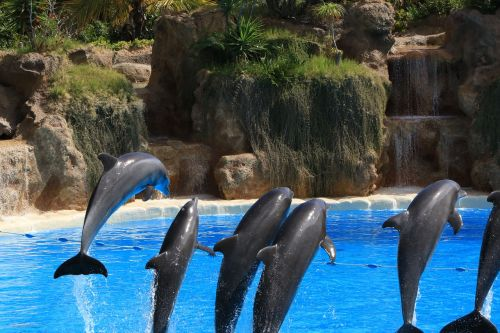 dolphins preview loro park