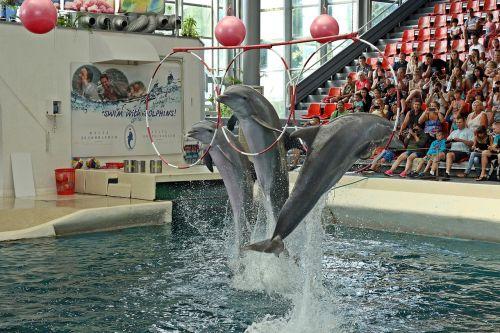 dolphins varna bulgaria