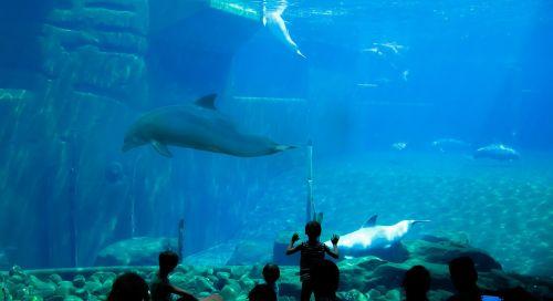 dolphins aquarium dolphin