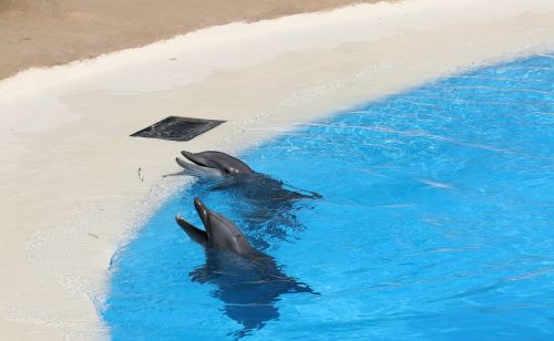 dolphins pool dolphinarium