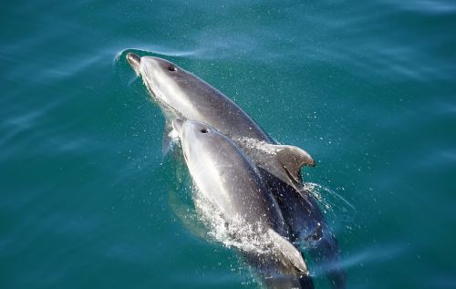 dolphins orthodontist marine mammals