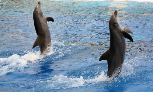 dolphins acrobatics marineland