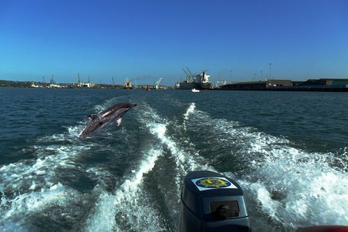 dolphins durban sea