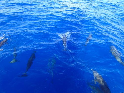 dolphins ocean water