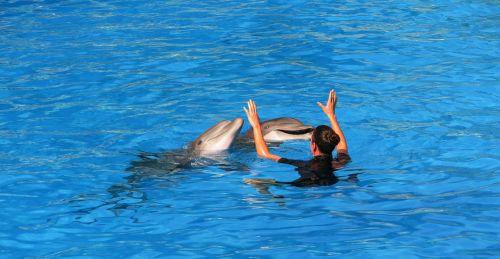 dolphins parrot park