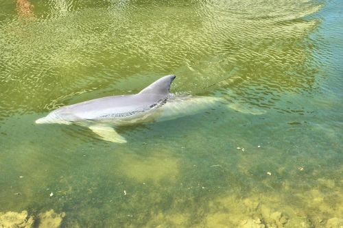 dolphins florida ocean