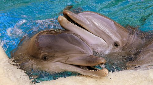 dolphins usa las vegas