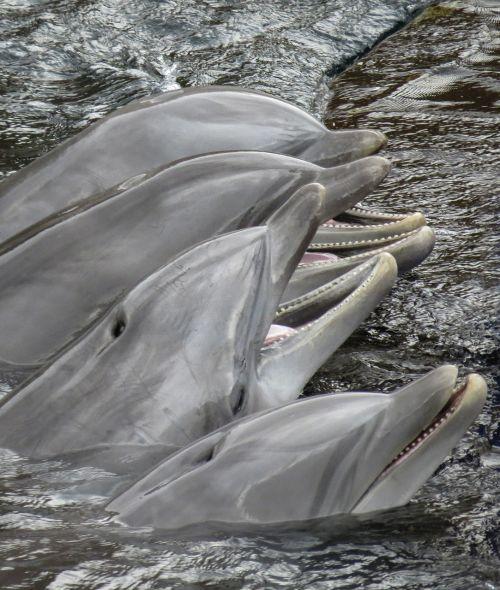 dolphins mammal sea