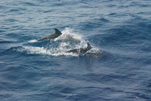 dolphins mammal dolphin