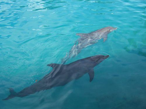dolphins water underwater