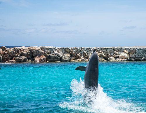 dolphins aquarium walking