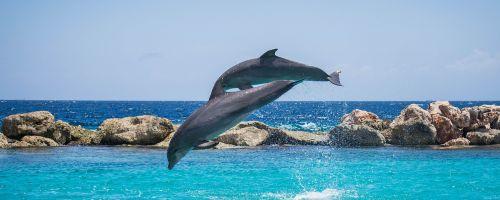 dolphins aquarium jumping