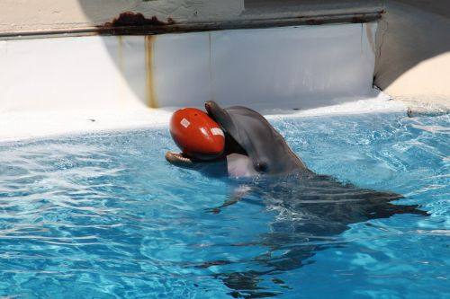 dolphins marine mammals dolphin