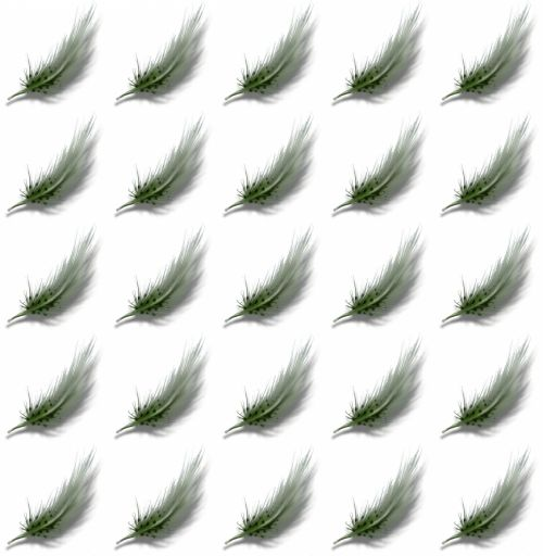 Dark Green Feathers