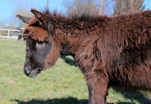 donkey animal beast of burden