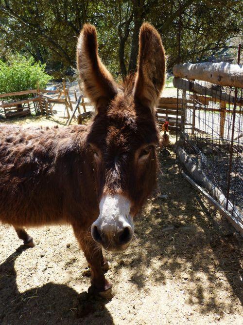 donkey ass farm