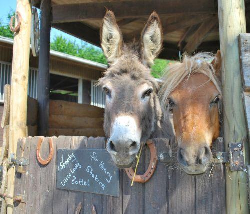donkey pony beast of burden