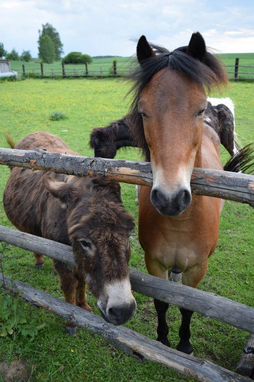 donkey horse friends