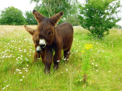 donkey dog eared two
