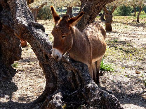 donkey mediterranean mallorca