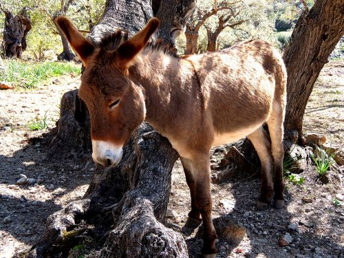 donkey mallorca rocky
